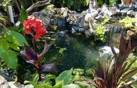 Pond Paradise After Maintenance
