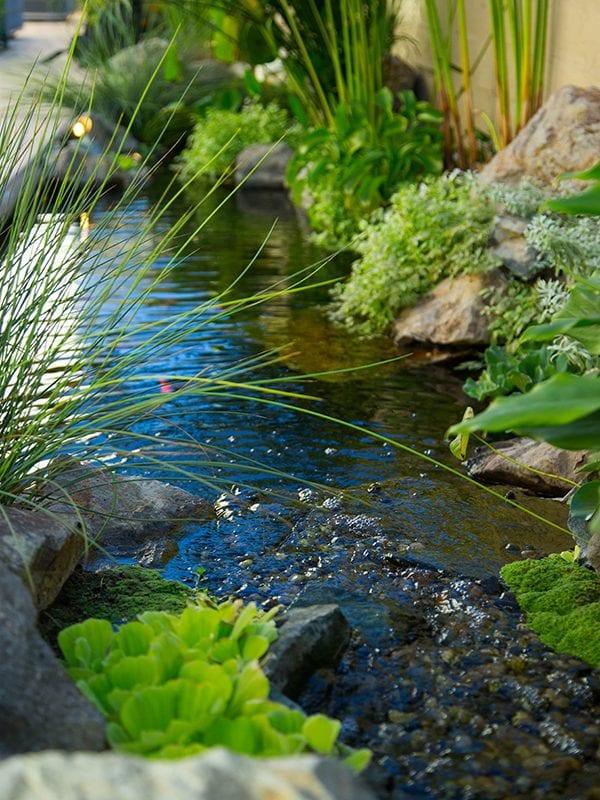 Plant lining stream alongside a wall