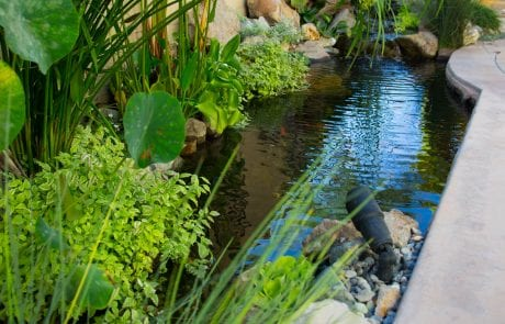 ide stream alongside patio lined with plants