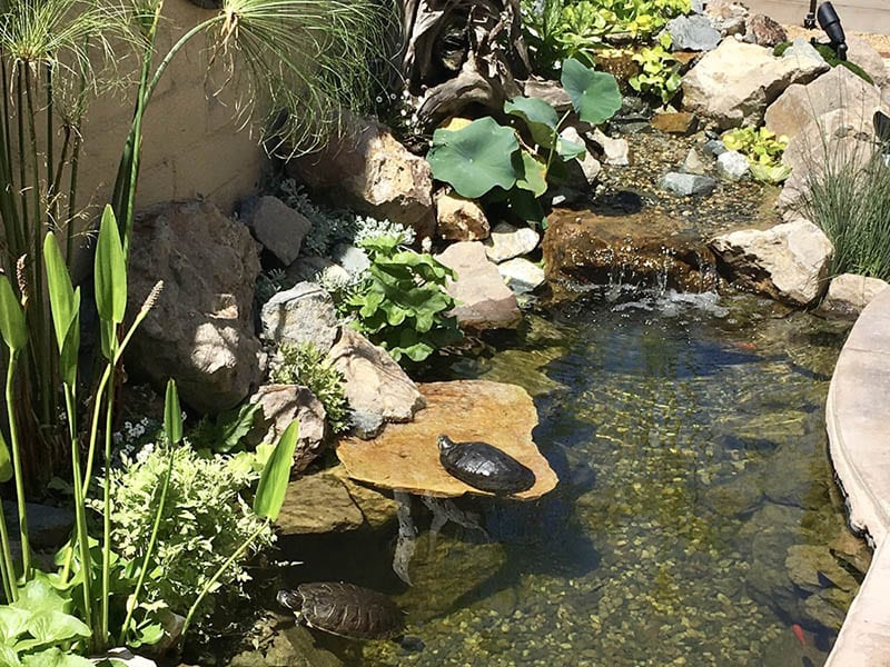 Small Pond Renovated In San Marcos - After